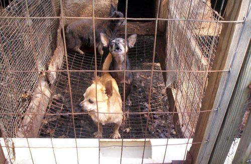 Ett vedervärdigt liv då buren är hundarnas hela tillvaro.