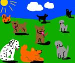 dog many pups