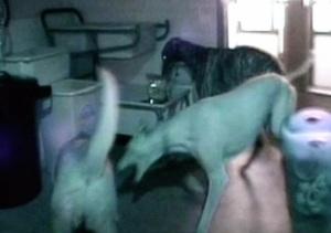 Nattligt kalas på hundhemmet!!
