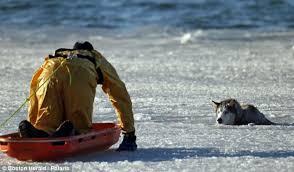 hund genom is