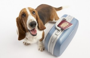 dog-in-suitcase1