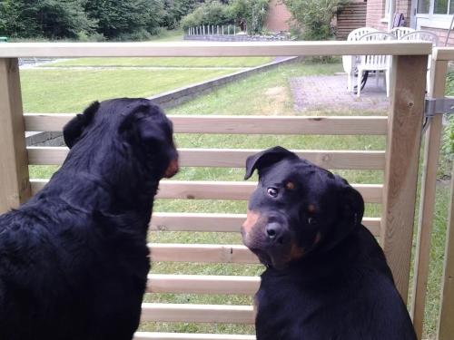 Gunvald och Bela spanar. Men Bella är just då mer intresserad av kameran..