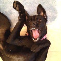 En helt annan hund i crazy-mood