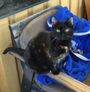 Katten Ina hade sprungit hem från skogen som för att larma, men ingen förstod