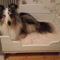 Cool hemmagjord hundbädd