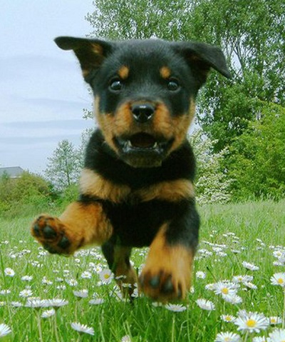 Vi skapar självklart våra hundars beteenden i vardagen..