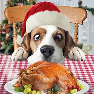 dog-christmas-meal