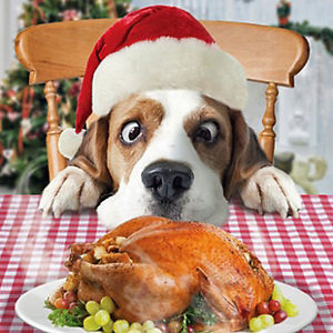 dog-christmas-meal