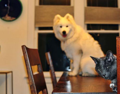 Katter alltså!!