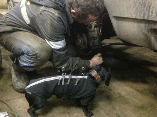 Viktigt att veta vad man ska göra med verktygen som man har nära till hands - framburna av hunden själv! <3