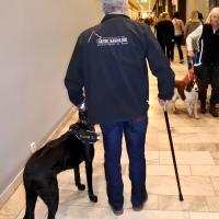 Seth Sjöbloms - hundcoachning och beteendeanalys