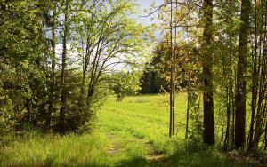 skog glänta