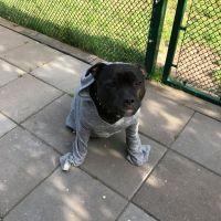 Smygtränande på andras hundar och annat fanstyg