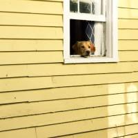Stöldsäsong av hundar - var beredda