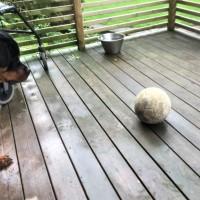 Clyde i spökåldern - övervinner rädsla för boll